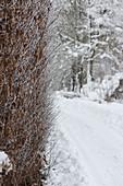 Weg im verschneiten Garten