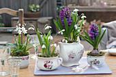 Oma's Geschirr bepflanzt mit Schneeglöckchen, Hyazinthen und Puschkinie als Tischdekoration