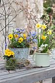 Blau-gelbe Frühlingsdekoration mit Primel, Hornveilchen, Strahlenanemone und Narzisse