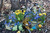 Österliches Topf Arrangement im Garten mit Narzissen und Strahlenanemonen