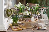 Milchstern, Traubenhyazinthen, Primel und Krokus in Oma's Tassen gepflanzt und mit Ostereiern, Osterhase, Steckzwiebeln und Moosherz dekoriert
