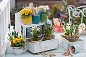 Frühlingsdeko mit Primeln, Traubenhyazinthen und Milchstern an Wandhänger mit Schubladen