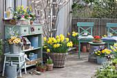Frühlingsterrasse mit Felsenbirne, Osterglocken, bepflanzter Kasten und Zinkeimer