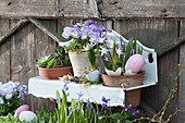 Töpfe mit Hornveilchen Rocky 'Lavender Blush', Hauswurz und Schneestolz in Wandhänger österlich dekoriert