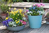 Frühling in Schale und Kübel: Narzissen, Blaukissen, Traubenhyazinthen, Ranunkeln, Tulpen, Hornveilchen und Primel