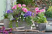 Frühlings-Arrangement mit Ranunkeln, Blaukissen, Traubenhyazinthen, Efeu und Purpurglöckchen