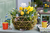 Frühlingskorb mit Tulpen und Traubenhyazinthen in Moos