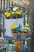 Frühling zum Verschenken: Tulpen, Traubenhyazinthen und Gämskresse 'Ice Cube' in Papier und Einkaufstasche