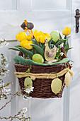 Gelbe Darwin-Tulpen 'Garant' österlich dekoriert im Korb