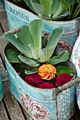 Wassersalat und Dahlienblüten in Jardiniere als Mini-Teich