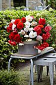 Begonia Cascade Odorosa 'White Blush', 'Red Sunset' und 'Sweet Pink'