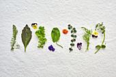 Verschiedene essbare Wildkräuter, Senfblätter und Blüten