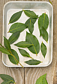 Bay leaves being dried in a tin