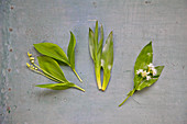 Wild garlic with lily of the valley and autumn lotus