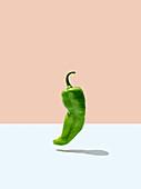 A green chilli pepper