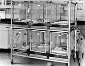 Nursery Cages in Primate Research