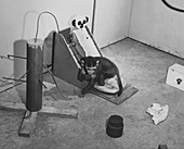 Harlow monkey experiment
