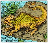 Orobon, Monster Fish, 16th Century