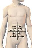 Four Quadrants of the Abdomen