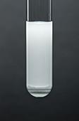 Silver chloride precipitate