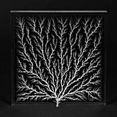 Electron Tree or Lichtenberg Figure