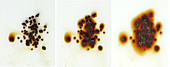 Instant coffee dissolving