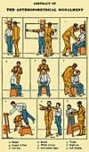 The Anthropometrical Signalment, 1896