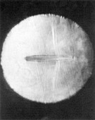 First Photograph of Shockwave on Airfoil, 1934