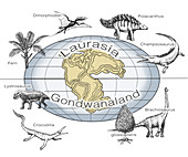 Laurasia and Gondwana, Illustration