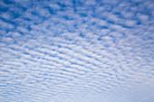 Altocumulus undulatus Clouds