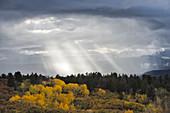 Rainstorm and Autumn Quaking Aspens