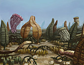 Precambrian, Illustration