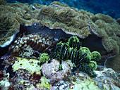 Coral, Anemones & Crinoid
