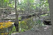 Suwanee River State Park, Florida