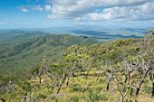 Tropical woodlands, Alkoomie Station, Cooktown