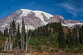 Mt. Rainier from Paradise, USA
