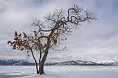 Winter Tree at Lake Kussharo, Japan