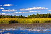 Freshwater Pond Littoral Zone Habitat