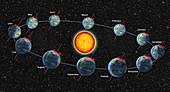Earth's Orbit Showing Months, Illustration
