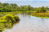 Mambili River, Congo
