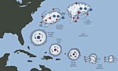 Tropical Storm Development, Illustration