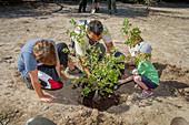 Children planting oak tree, USA