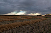 Virga over farm field