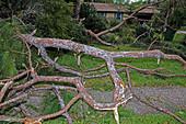 Hurricane Irma residential storm damage