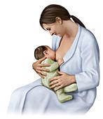 Breastfeeding, illustration