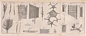 Feather and plant anatomy by van Leeuwenhoek, 1692