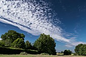 Altocumulus stratiformis clouds over a rural scene