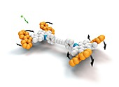 Molecular car, molecular model