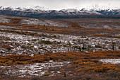 Autumn Tundra, Denali, Alaska