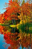Brady's Lake